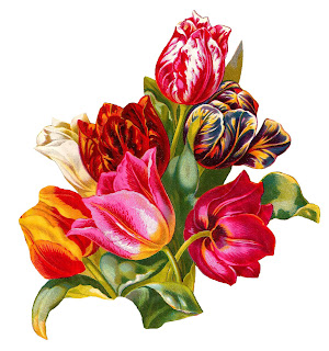 flower tulip illustration clipart artwork botanical image