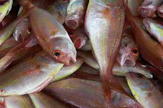 Tuna machhali khane ke phayde