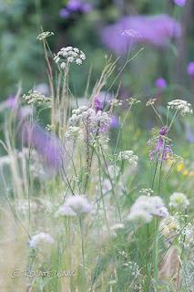 Das Magerbeet im New German Garden Style zeigt sich im Sommer weich und zart - mit Bergfenchel und Zierlauch