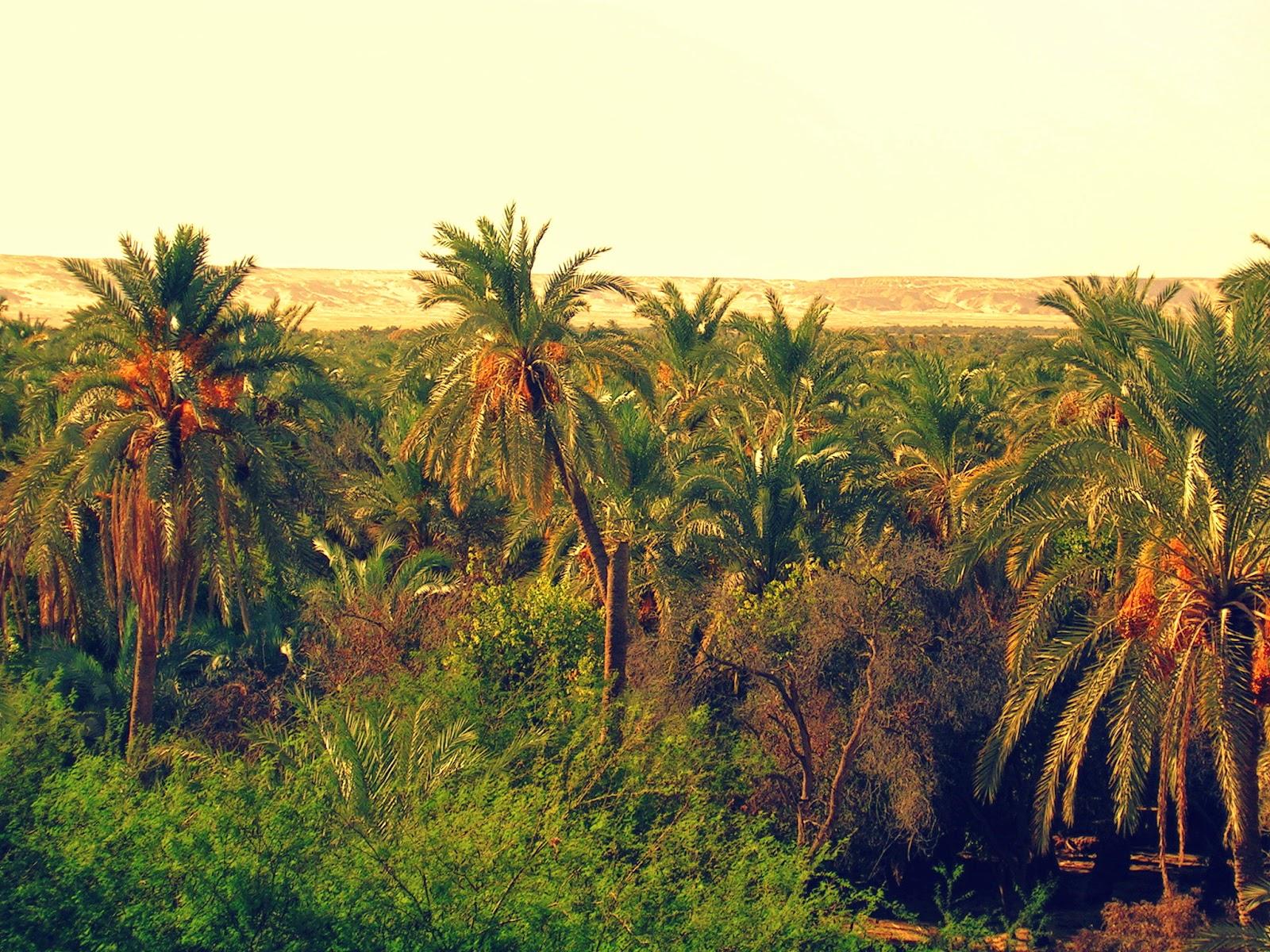 Foto Oasis de Bahariyya 4