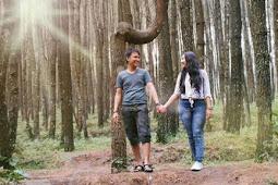 Hutan Pinus Kayon, Wisata Baru di Semarang