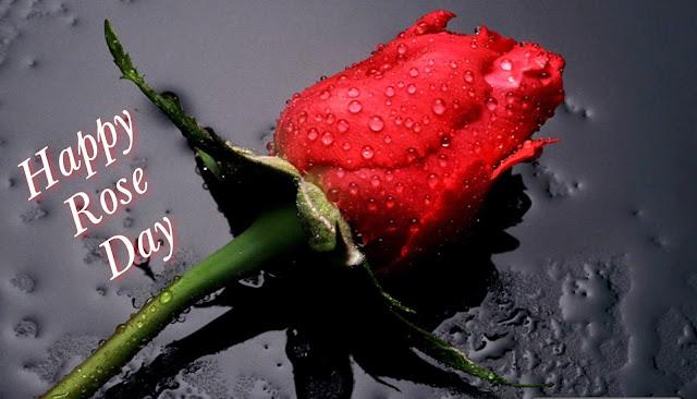 rose day,valentine day,valentine day whatsapp status,rose day whatsapp status,happy rose day,rose day status,rose day 2019,happy valentines day 2019,rose day status 2019,happy rose day status,valentine day status,valentines day,valentines day 2019,valentine day status 2019,valentine day kab hai 2019,happy valentine day 2019 date,happy rose day 2019,rose day video,rose day special,kiss day