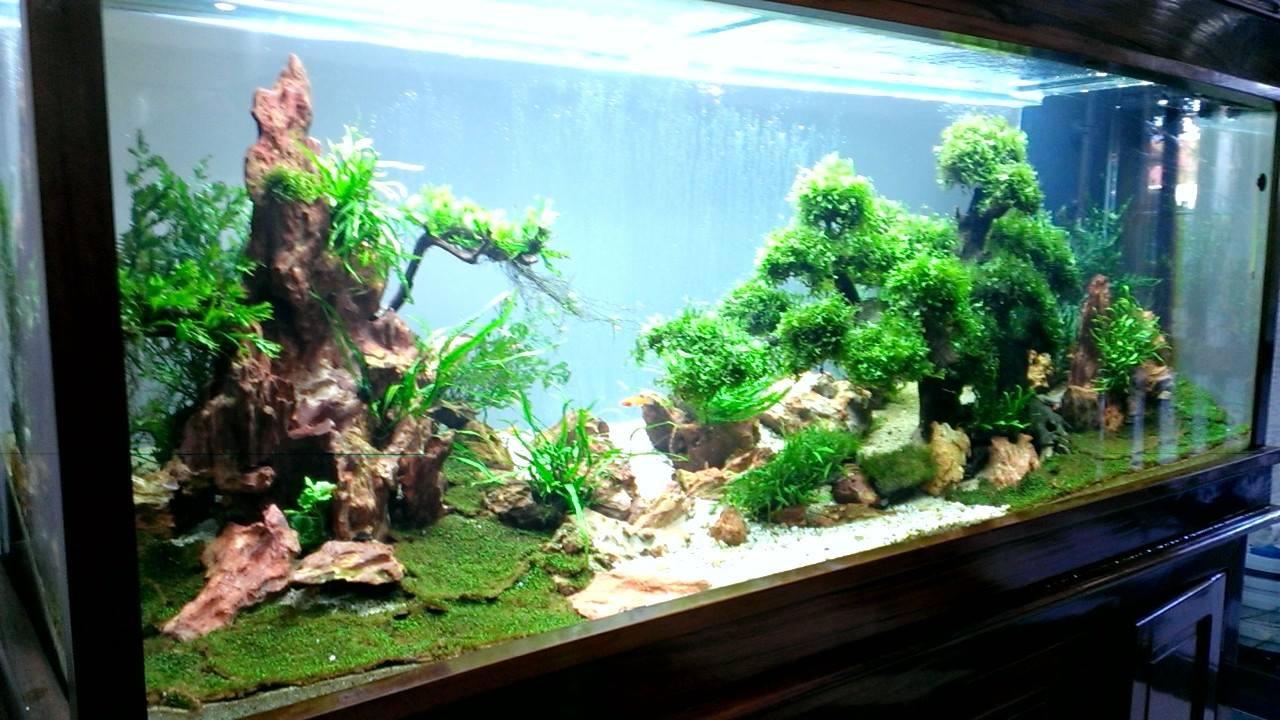 hồ thủy sinh bon sai với rêu pelia