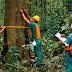Kebijakan Anak Perusahaan Royal Golden Eagle (RGE) Dalam Pengelolaan Hutan Berkelanjutan