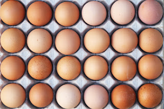 Fipronil eggs contamination