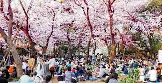 ueno park taman bunga sakura