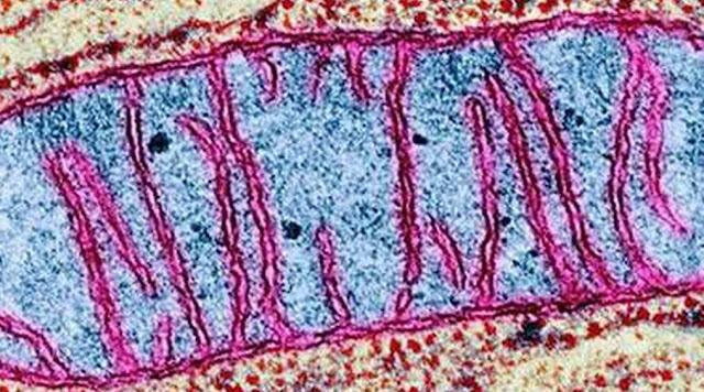 Mitocondria y biologia celular