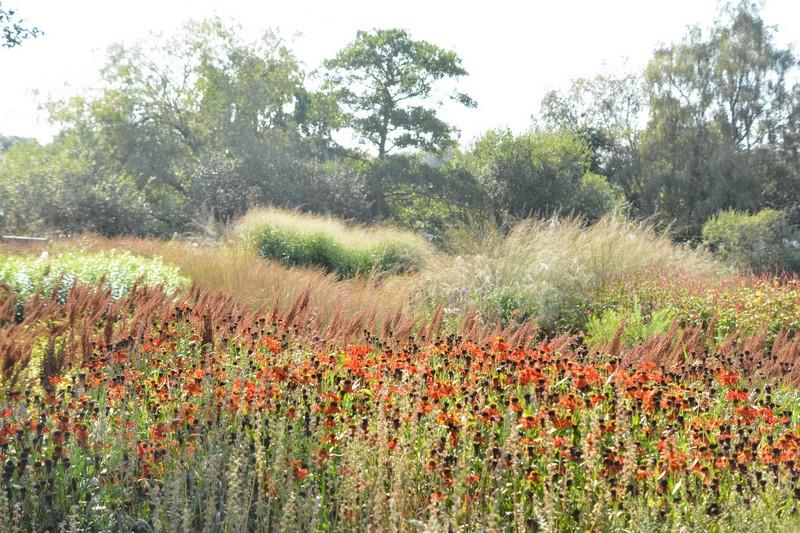 Un exuberante tapiz de color y textura en el jardin diseñado por Piet Oudolf en el Parque Natural Pensthorp, Inglaterra