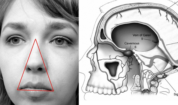The area of your face that extends from your nose bridge down to the upper lip area is known as the 'danger triangle' or 'triangle of death'.