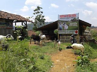 Komplek peternakan domba di Pasir Tugaran.