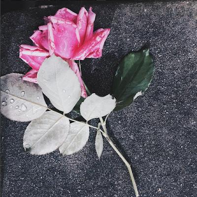 Flor pós-chuva