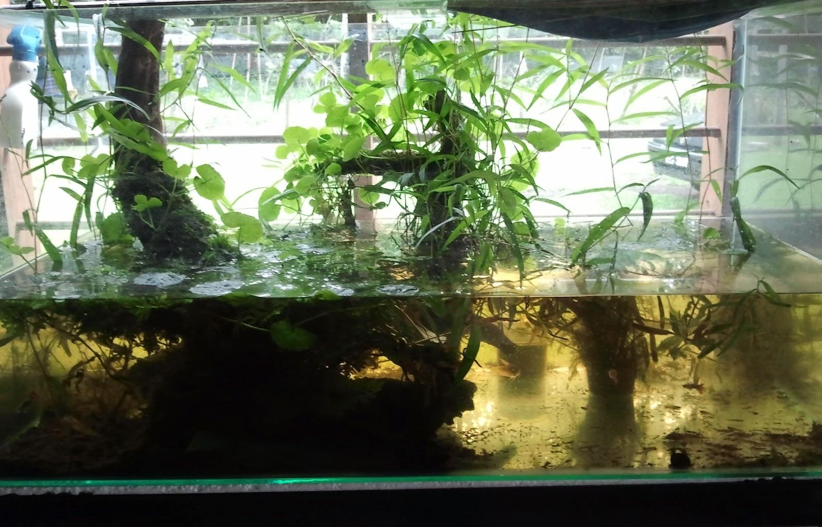 Aquatic Plants Sale Malaysia