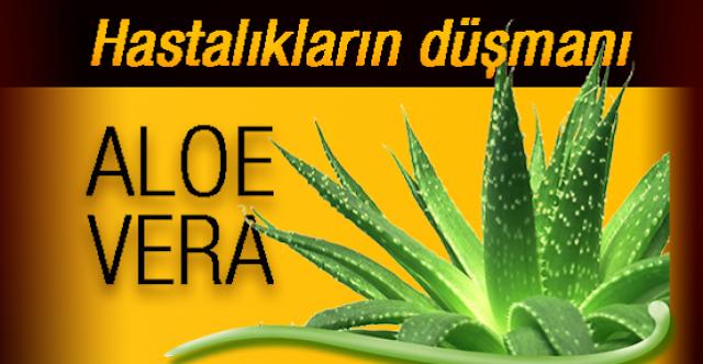 Aloe Vera Nedir? Aloe Veranın ( Sarısabır) Faydaları?
