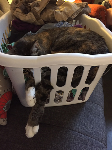 catladyland cats are funny my cat lounges through the laundry basket