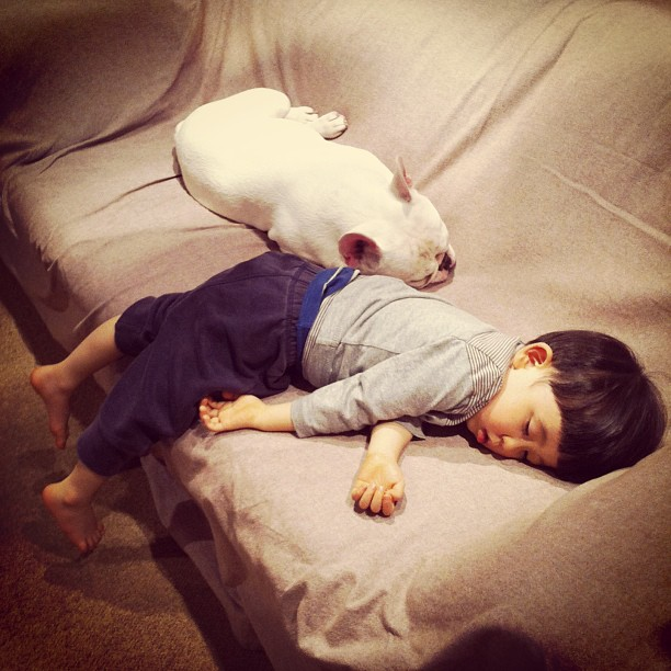 Adorable Friendship Between a Boy and His French Bulldog