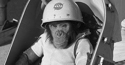 Перших мавп-космонавтів вводили в смертельний сон