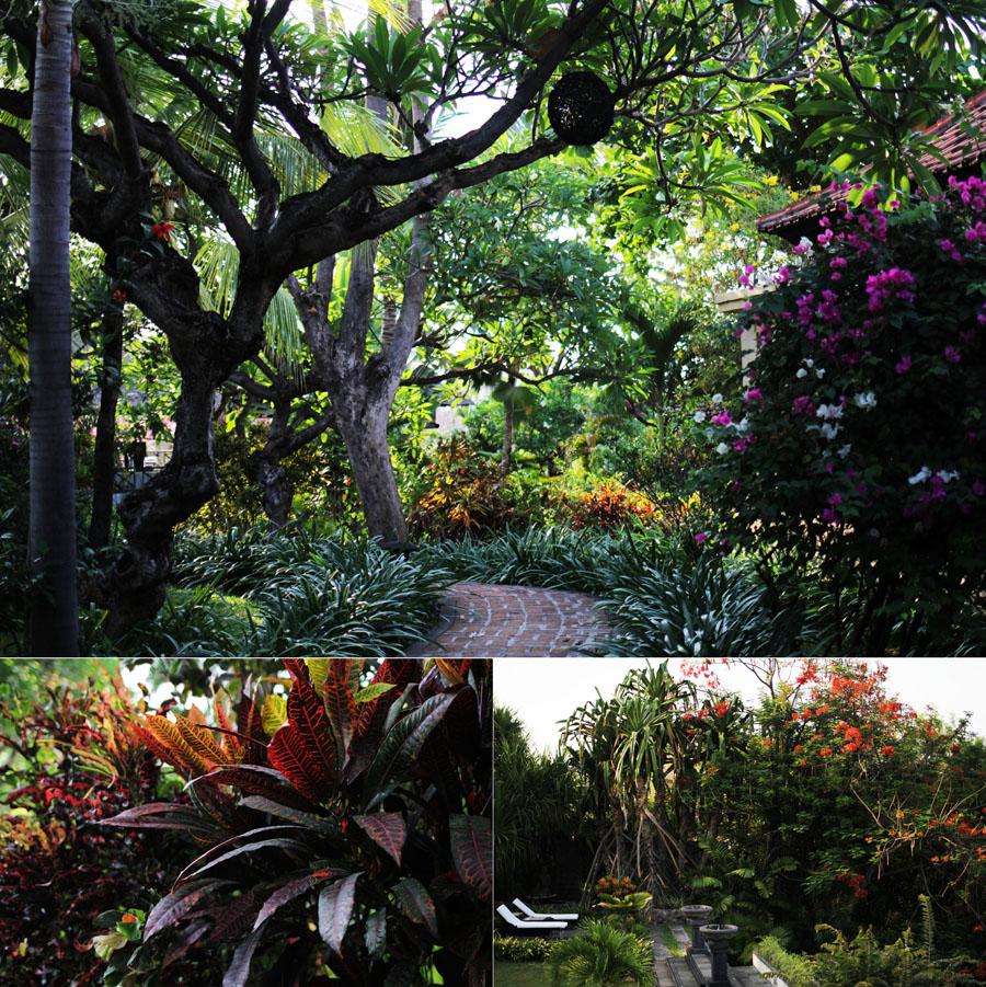 natur grün anlage bali zen resort