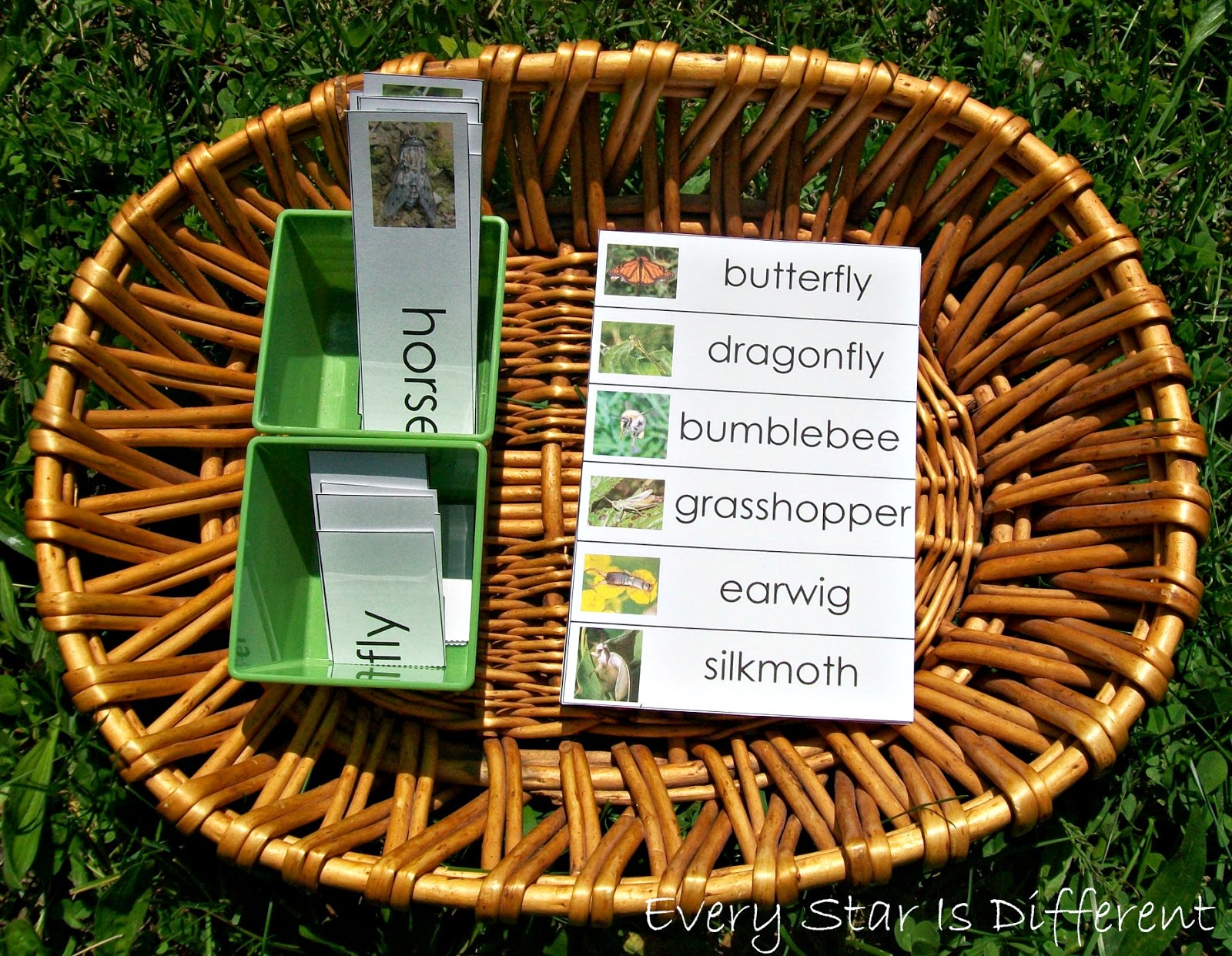 Insect themed compoun word activity for kids (free printable)