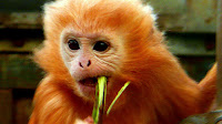 Image result for pictures of monkeys