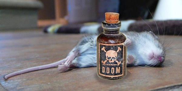 mouse poison
