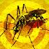 ALERTA: Sobe para 53 o número de pessoas mortas por suspeita de febre amarela em MG