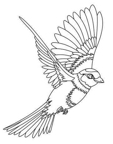 19+ Gambar Burung Elang Hitam Putih