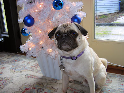 Liam the pug with his Christmas tree