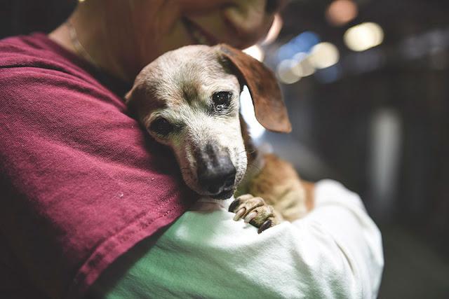 τυφλός σκύλος καταφύγιο ζώων