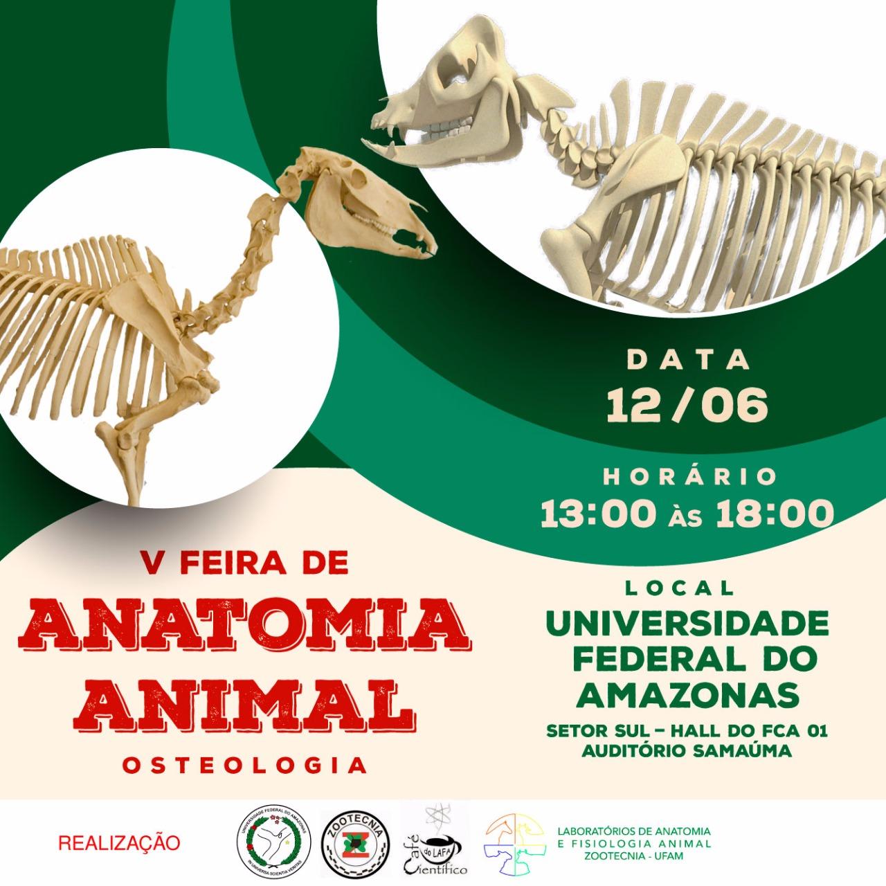 Atractivo La Anatomía Y La Fisiología Del Amazonas Motivo - Anatomía ...