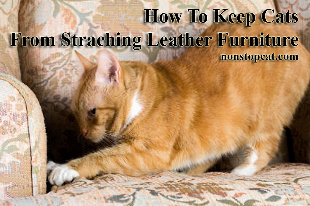 How To Keep Cats From Straching Leather Furniture
