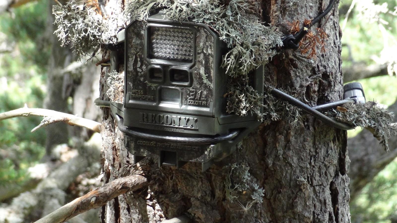 Cámara para animales del bosque, Reconyx