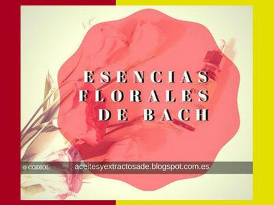 Las Esencia florales de Bach con esencias florales en consonancia con la naturaleza humana