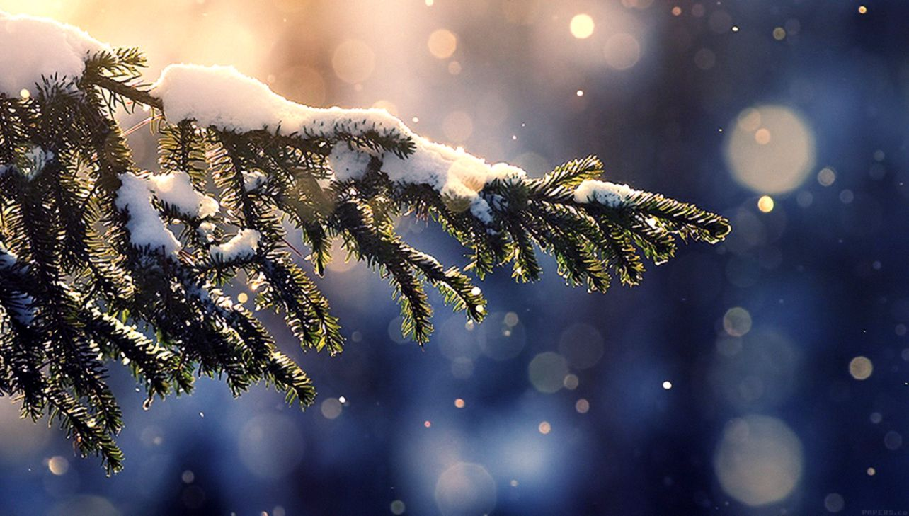 Christmas Winter Tree Hd Wallpaper Wallpapers Base
