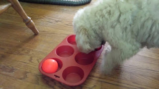 Image: Muffin/Cupcake/Ball Game © Catherine Watt of PupVacay.com - All rights reserved