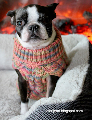 Sinead the Boston terrier in front of the fire