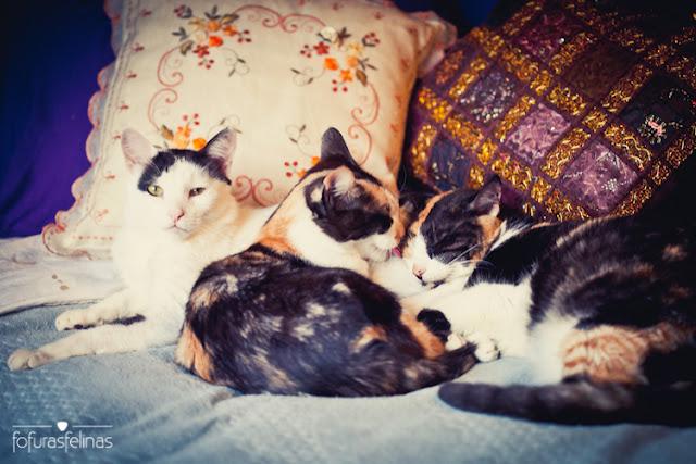 Como adaptar um novo gatinho à casa | Comportamento Felino (2/3)