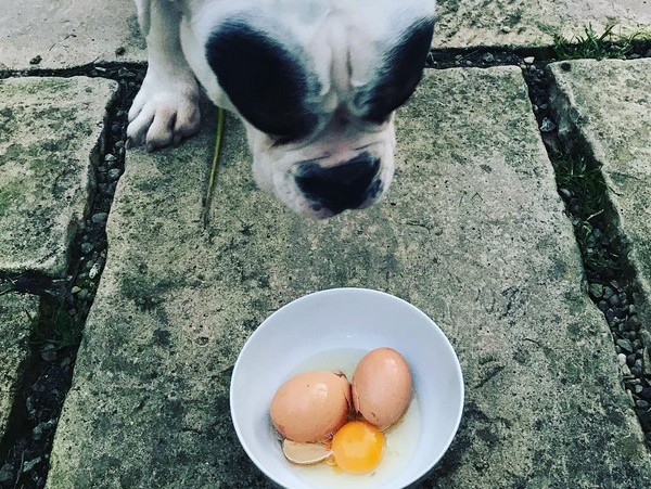 Aliments Interdits aux Chiens - Oeufs crusa