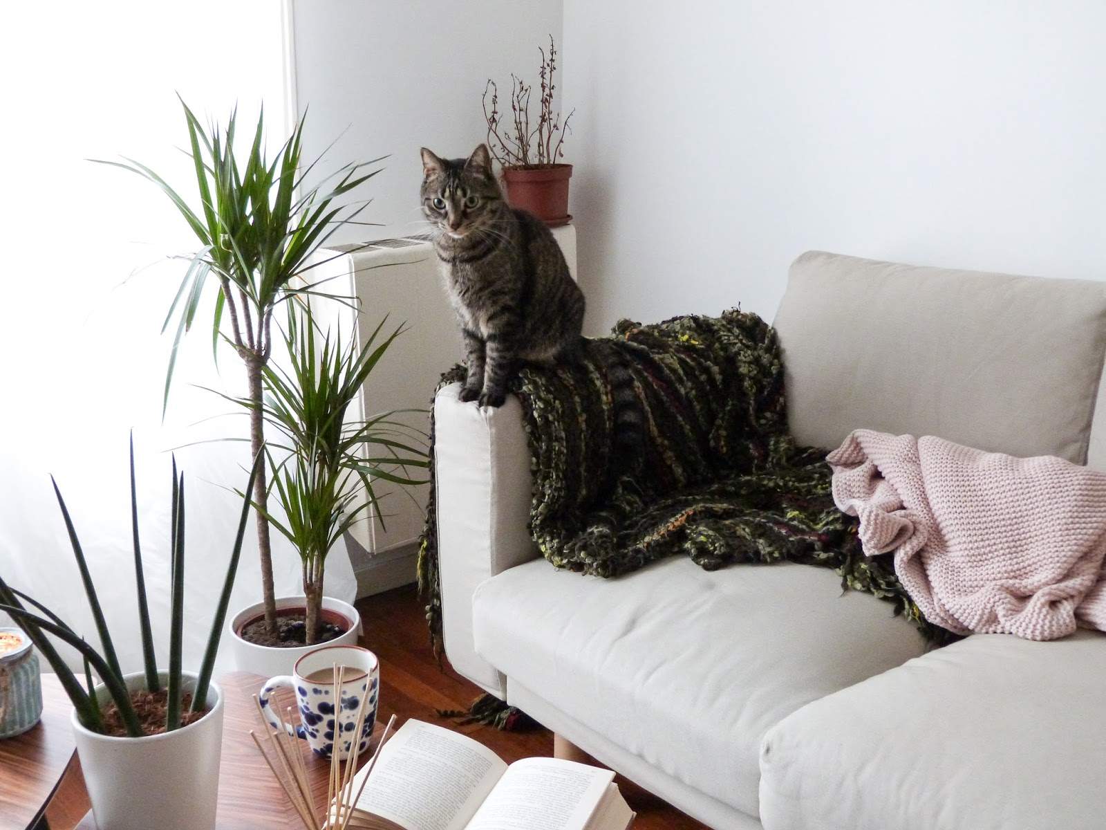 Life hacks for cat owners