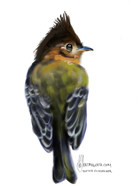 Tufted flycatcher Bird painting by Artmagenta