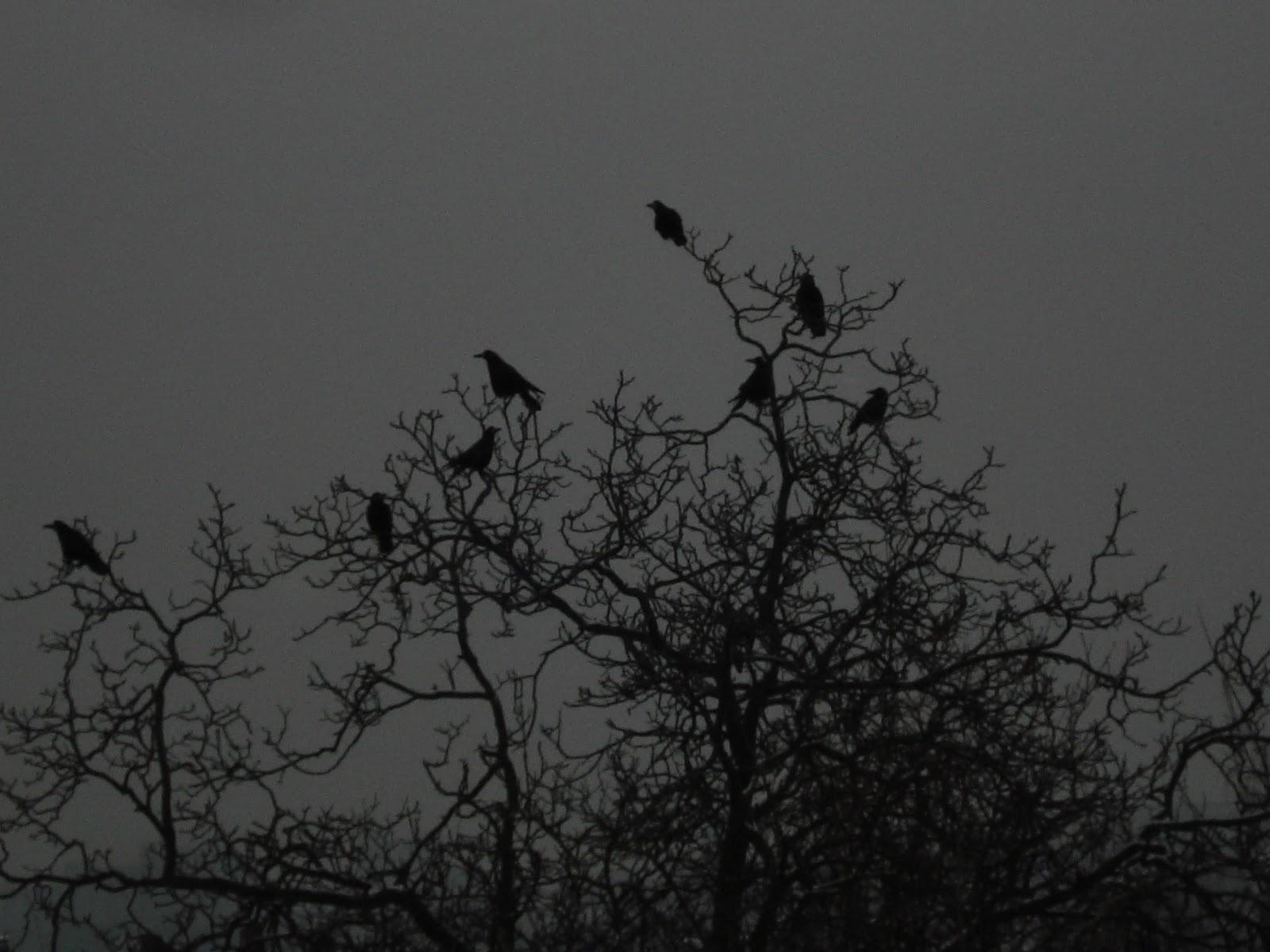 Schwarzer Tag