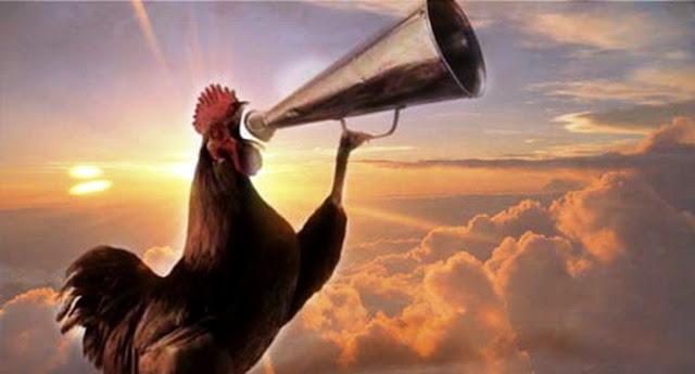 Berdoalah Ketika Mendengar Ayam Jantan Sedang Berkokok Di Malam Hari, Insya Allah Cepat Dikabulkan