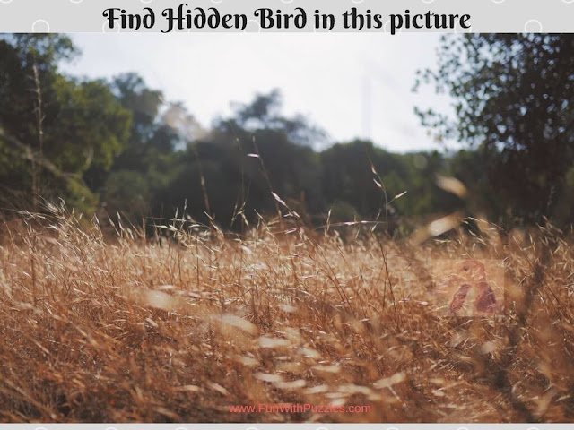 Hidden Bird Picture Riddle