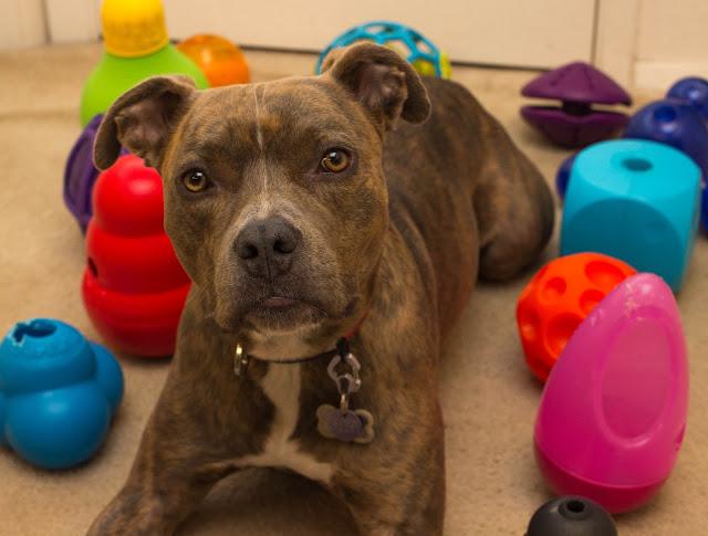 Food-dispensing-dog-toys