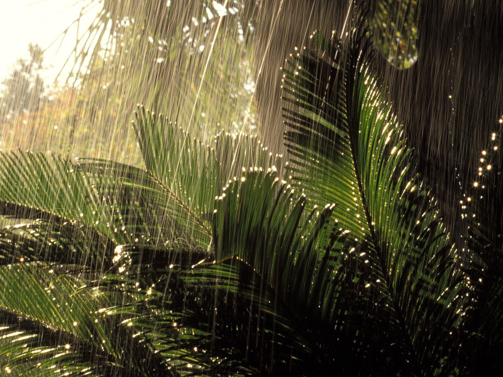 Tropical Rainforest Wallpapers