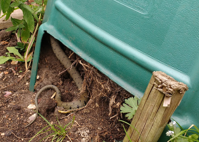 grass snake living on the allotment