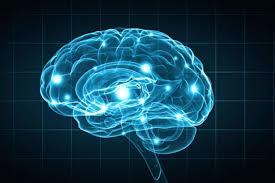 Human brain secret