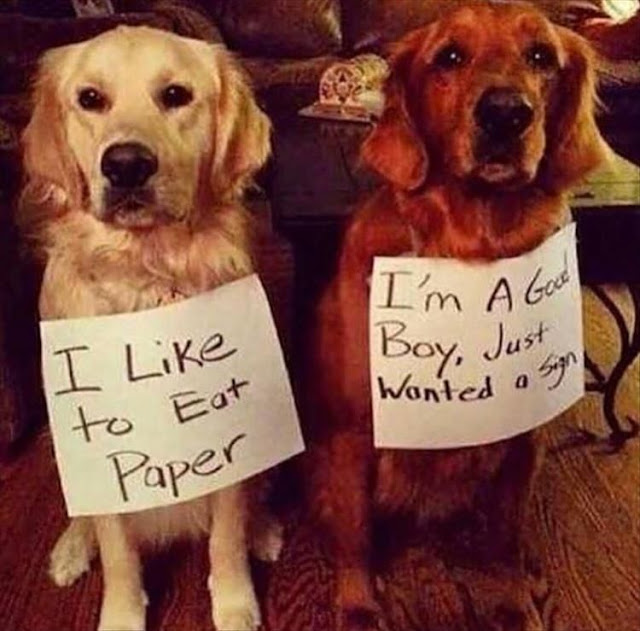 I like to eat paper.  I'm a good boy, just wanted a sign