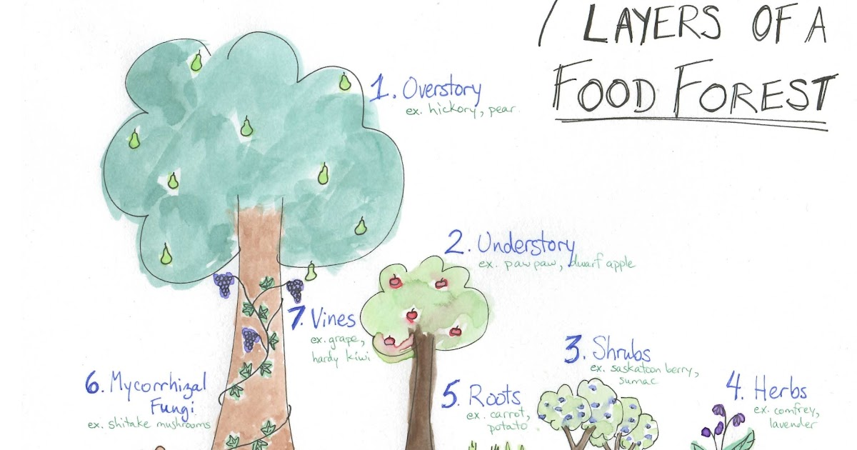 Community Food Forest London Ontario