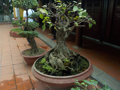 鎮国寺本堂前の盆栽