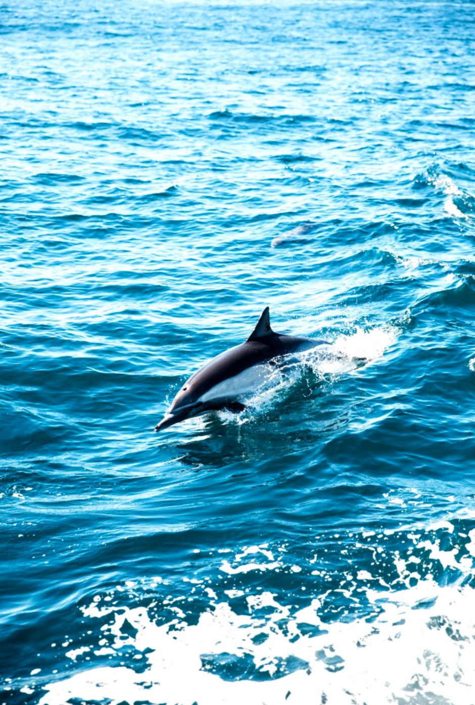 20 Dolphin Pictures Download Free Images on Unsplash